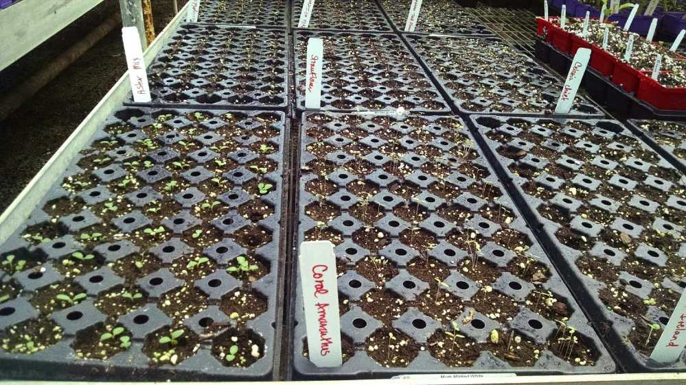 flower seeds (1)
