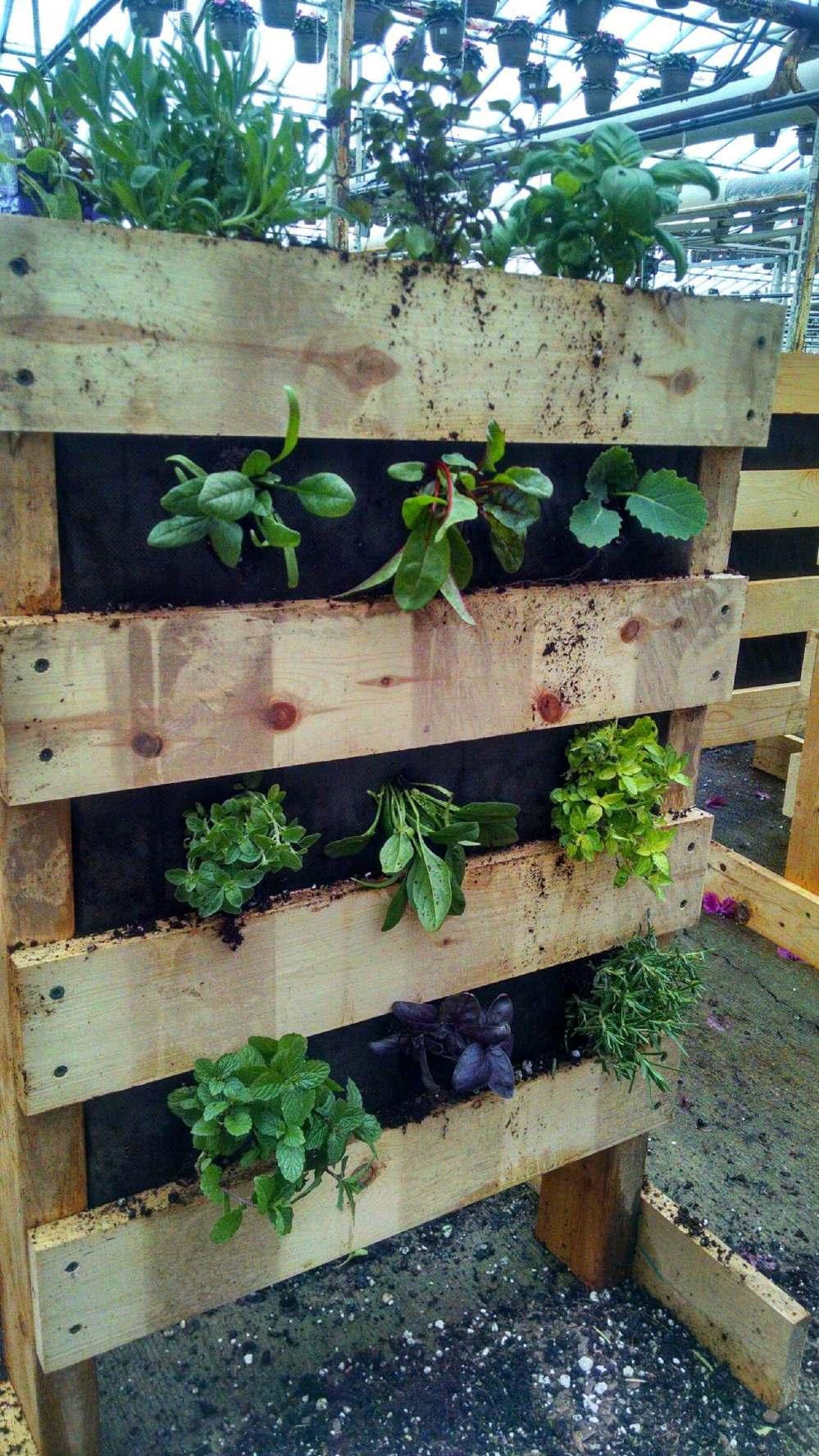 wint garden
